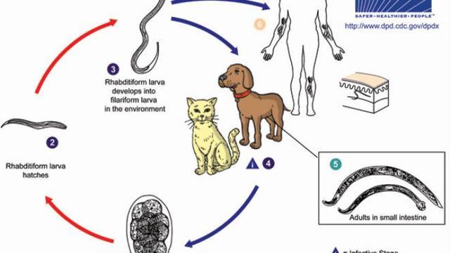 Bệnh Sán Chó Có Mang Thai Được Không?