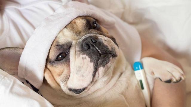 Thuốc Trị Sán Chó Ở Người, Tại Phòng Khám Ký Sinh Trùng